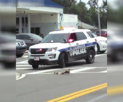 Trafikte kalan ördeklere polis eskortluk yaptı