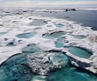 Okyanuslardaki vahşi yaşam tehlike altında