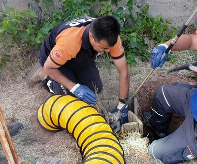 5 metrelik kuyuya düşen kediyi AFAD kurtardı