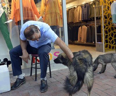 Kendini sokak hayvanlarına adadı