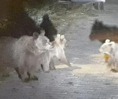 Aç kalan ayılar çöpte yiyecek aradı