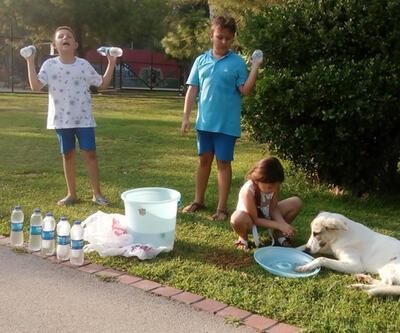 Su satarak hayvanlara mama alan çocuklara Başkan Piriştina'dan destek