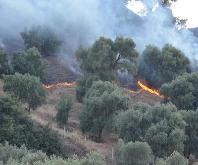 Aydın'da zeytin ağaçları yandı