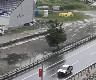 Kurbanlık boğa Karadeniz Sahil Yolu'nu karıştırdı