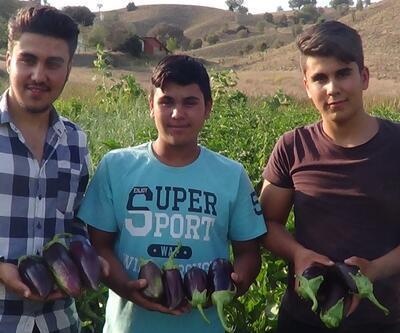 100 yıllık tohumdan üretilen patlıcana büyük ilgi