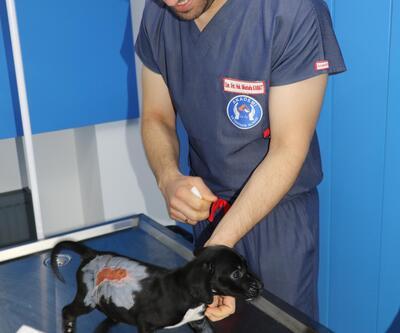 Fatsa'da yavru köpek kaynar su ile yakıldı