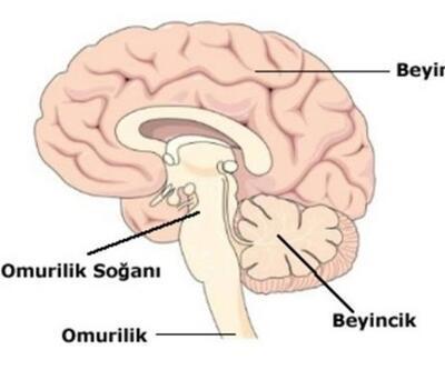 Beyincik dejenerasyonu nedir?