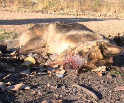 Sokak köpeği, işkenceyle öldürülmüş halde bulundu