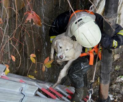 Muğla'da çayda mahsur kalan köpek kurtarıldı