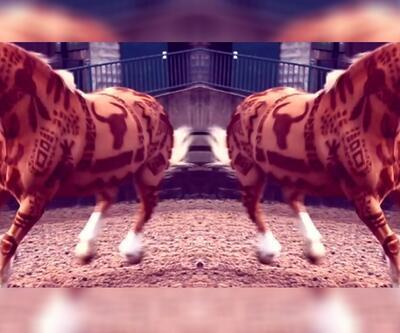 Atları tıraş tekniği ile ezber bozdu
