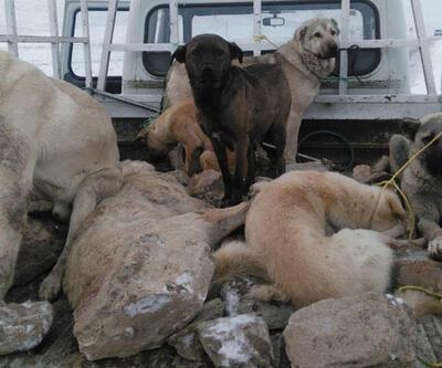 Belediyenin topladığı 'kayıp köpekler' için soruşturma