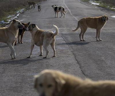 Sokak hayvanları için düzenli kısırlaştırma talebi