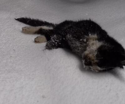 Sokak kedisi aşırı soğuklardan dondu