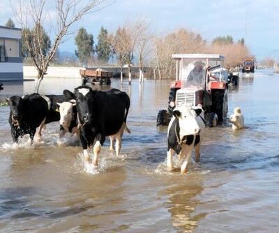 Büyük Menderes taştı, mahalle ve tarım arazileri su altında kaldı