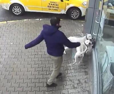 Sakarya'da iki pitbull'un saldırdığı sokak köpeği ağır yaralı