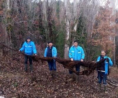 Su borularından 8 metrelik ağaç kökü çıktı