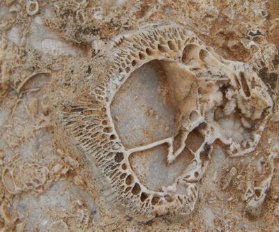 Doğa yürüyüşünde, 98 milyon yıllık deniz canlısı fosil yatağı buldu