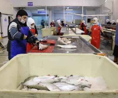 Karadeniz'den dünyaya somon ihracatı