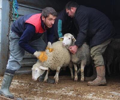 Kırklareli'nde genç çiftçilere 102 küçükbaş hayvan dağıtıldı