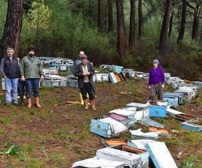 Sakin kent Ula'da ayılar arı kovanlarını parçaladı, 1 arıcıya saldırdı
