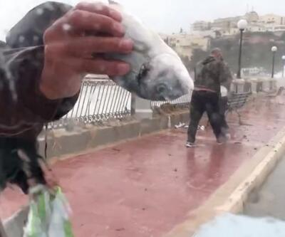 Dev dalgalar sonrası balıklar kıyıya vurdu