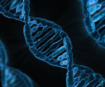 Bilim insanları: Hayvandan insana geçen bakteriler ruh hastalığına neden olabiliyor