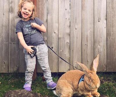 Dev tavşan ile küçük kızın dostluğu fenomen oldu