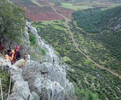 Kayalıklarda mahsur kalan keçileri AFAD ekibi kurtardı