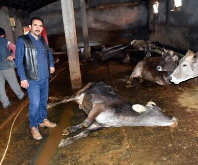 Sivas'ta, şüpheli hayvan ölümleri tedirgin etti