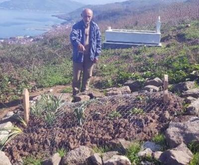 Mezarları, yaban domuzlarından tel örgüyle koruyorlar