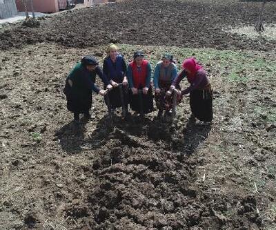 Bahar geldi, Karadenizli kadınlar tarlalarda