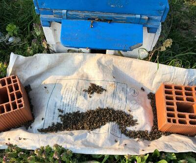 İnegöl'de milyonlarca arı ölü bulundu