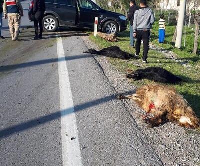 Cipin çarptığı 18 hayvan öldü