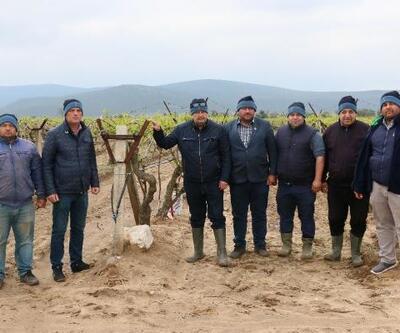 Dolu yağışı Saruhanlı'da ekili araziler ve seralara zarar verdi
