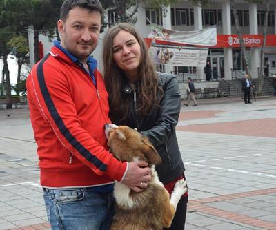 Sokak köpekleri, hayvansever çifte koştu