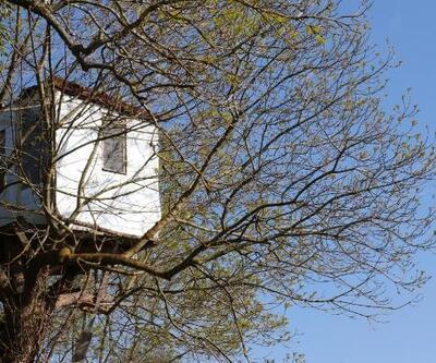 Bahçesine 9 metre yüksekte ağaç ev yaptı
