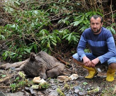 Yaralı bulunan boz ayı kurtarılamadı