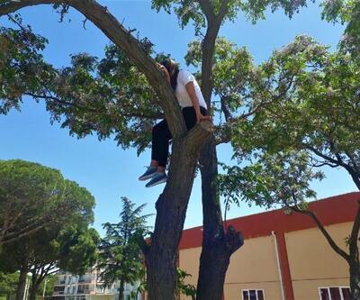 Kediyi kurtarmak için çıktığı ağaçta mahsur kaldı, itfaiye kurtardı