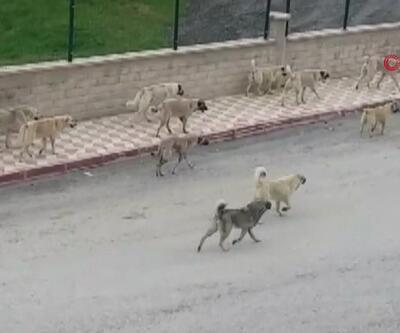 Yaşlı kadın köpeklerin saldırısında öldü