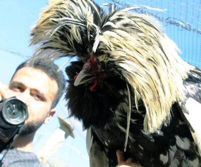 Hayvan sevgisi YouTuber yaptı