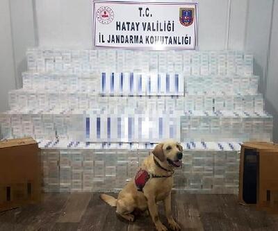 Divit'li aramada 42 bin paket kaçaksigara ele geçirdi