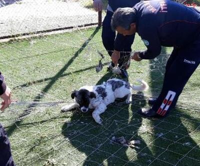 Kale ağına takılan sokak köpeğini itfaiye ekipleri kurtardı