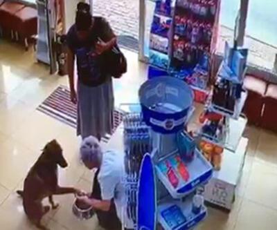 Yer: İstanbul... Yaralı köpek eczacıdan böyle yardım istedi