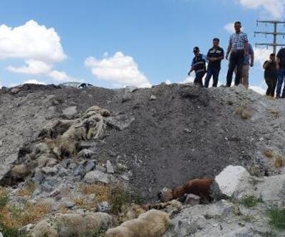 Konya'da, arazide bulunan 15 köpek ölüsüyle ilgili suç duyurusu