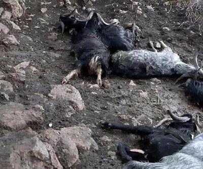 Manisa'da ağıla yıldırım düştü; 10 keçi telef oldu