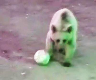 Şantiye bekçisi ayıyla top oynadı