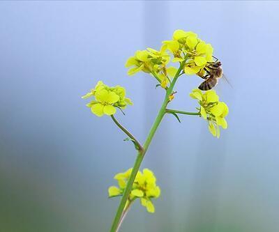Manisa'da arıların soktuğu kadın hayatını kaybetti