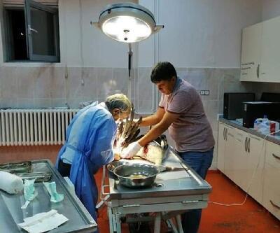 Bingöl'de kanadı kırık leyleğe tedavi