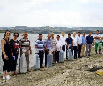 Manisa'daki göl ve göletlere 100 bin sazan yavrusu bırakıldı