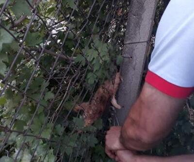Bahçe tellerinde sıkışan yavru kedi kurtarıldı